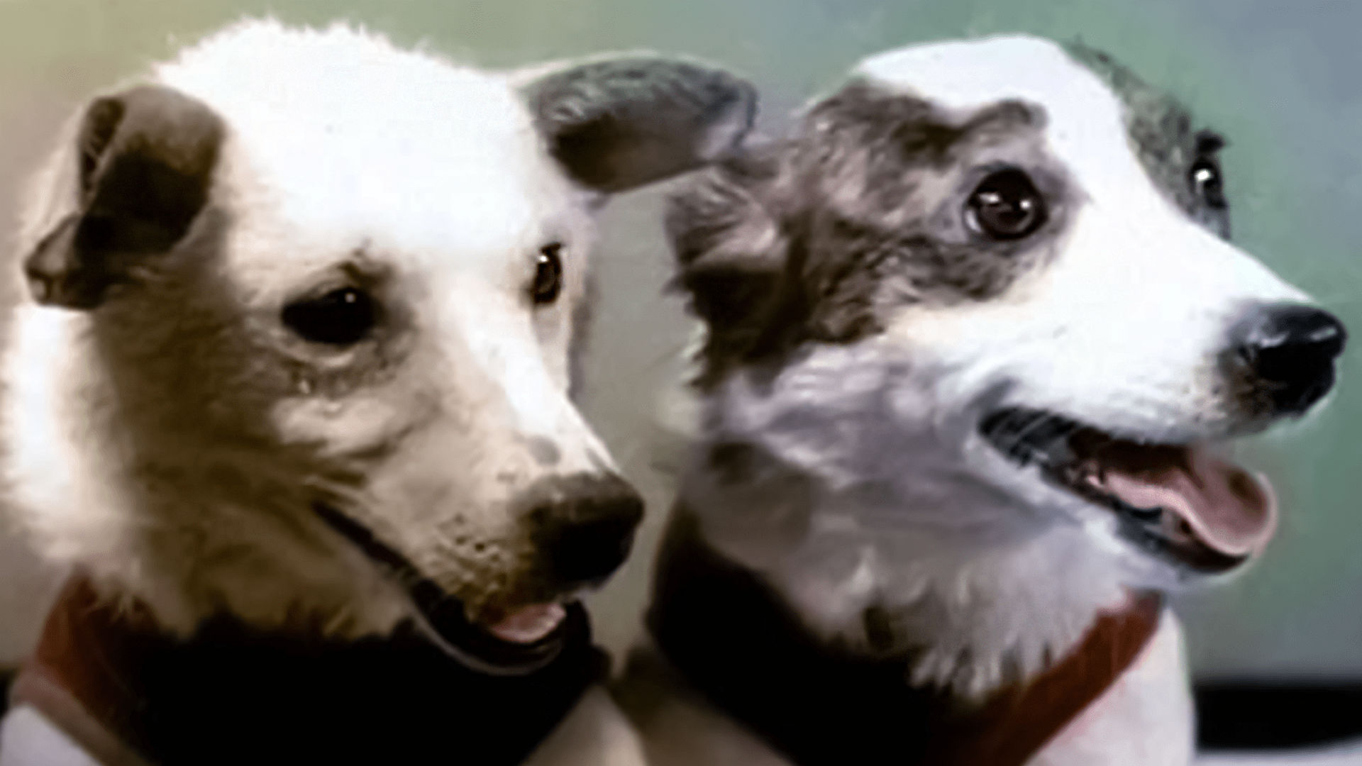 The 60th Anniversary of Belka and Strelka's Flight
