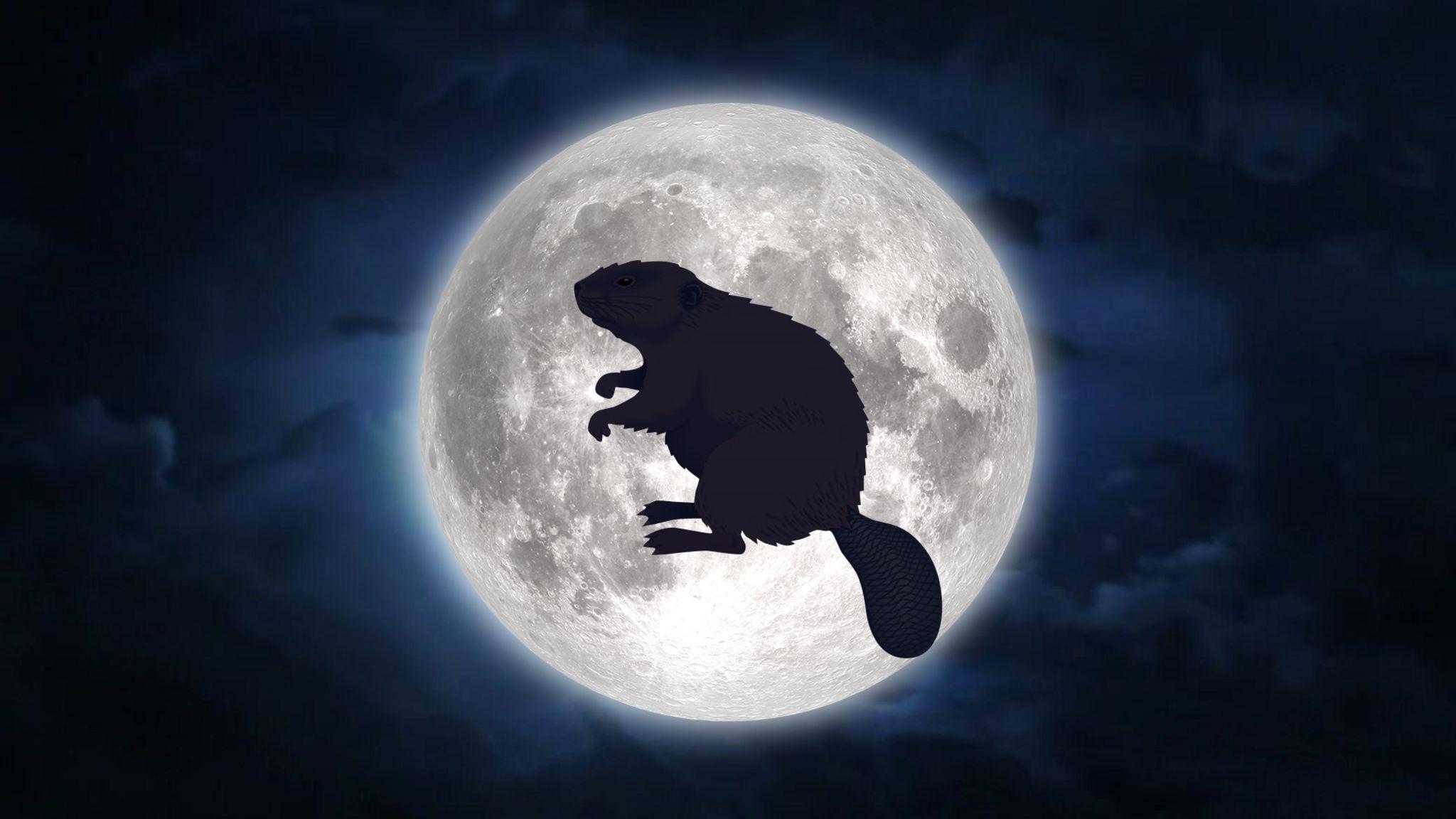 La luna llena de castor de noviembre
